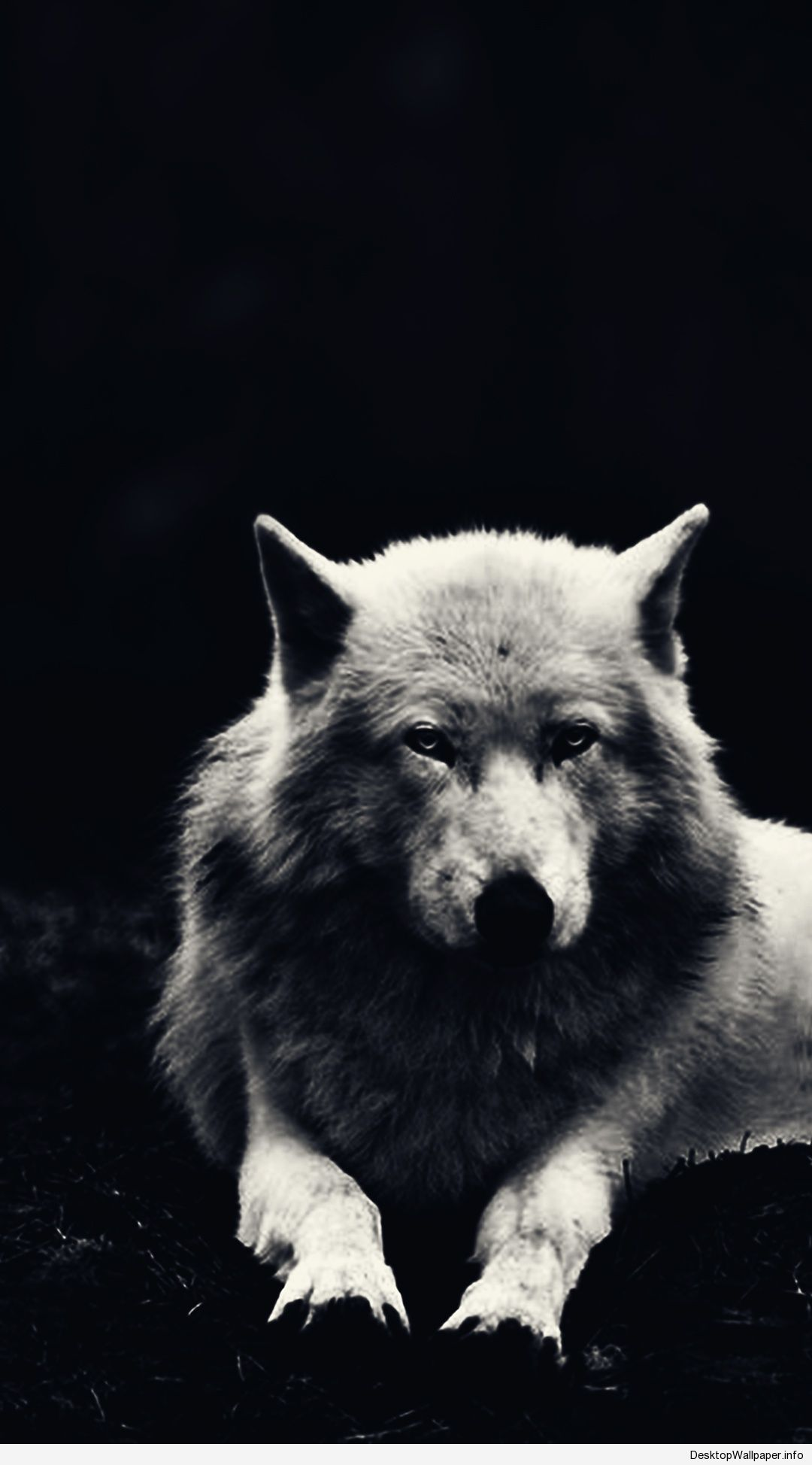 Android Wolf Wallpapers On Wallpaperdog