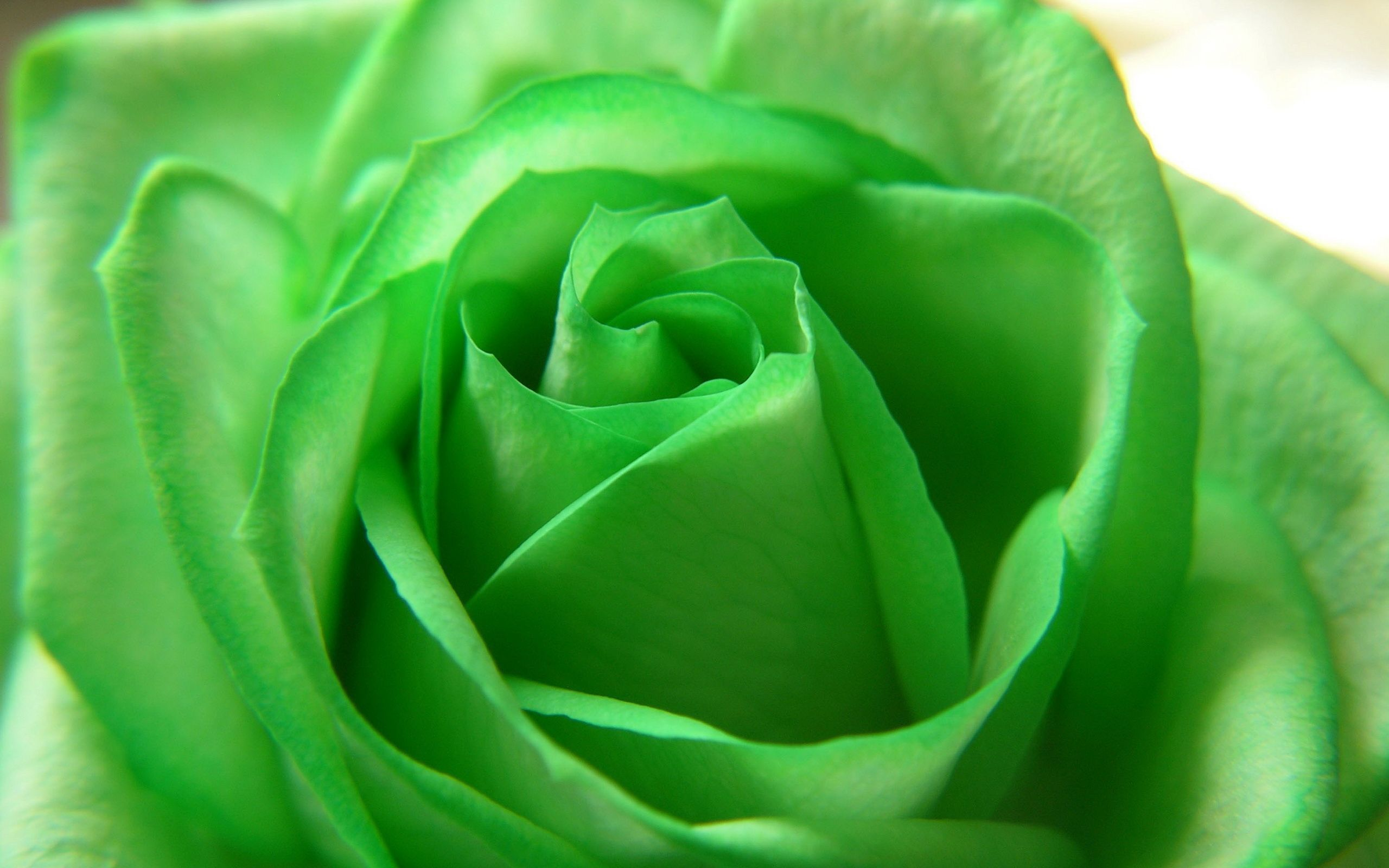 Green Flowers Desktop Wallpapers on WallpaperDog