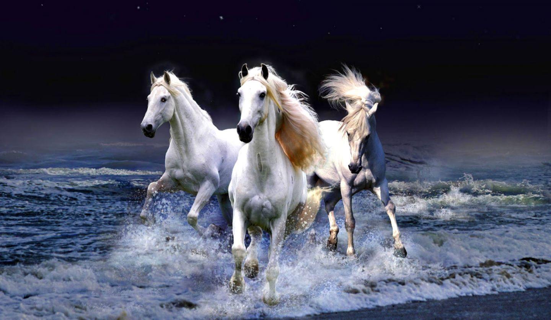 White Horse Wallpapers On Wallpaperdog