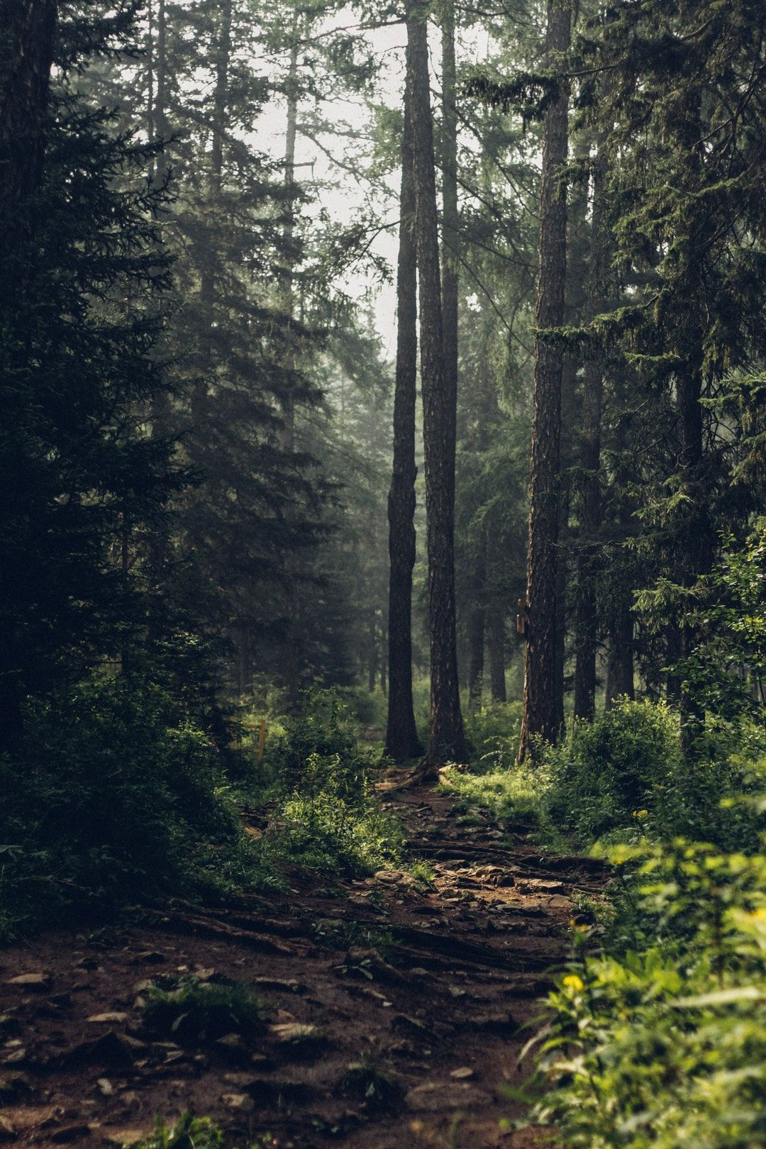 Nature Forest Wallpapers On Wallpaperdog