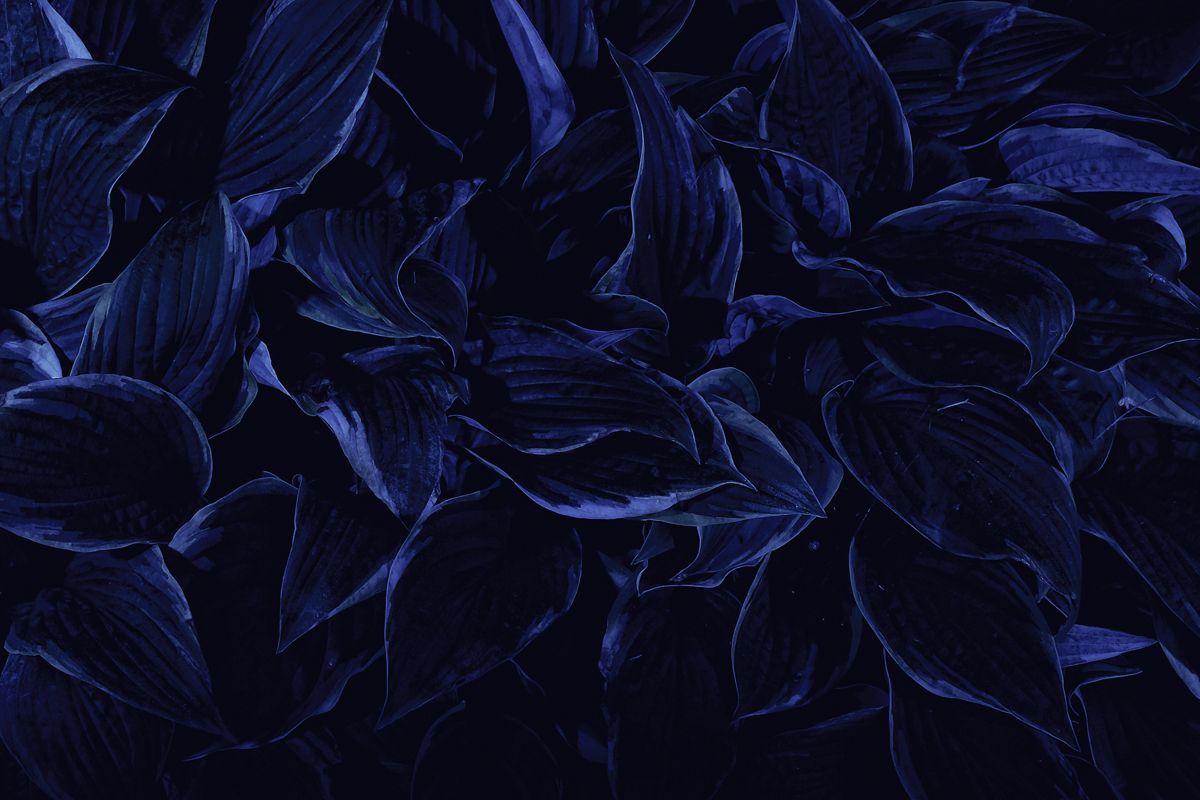 Dark Blue Wallpapers Asthetic Dark Blue Aesthetic Desktop Wallpapers On Wallpaperdog dark blue aesthetic desktop wallpapers