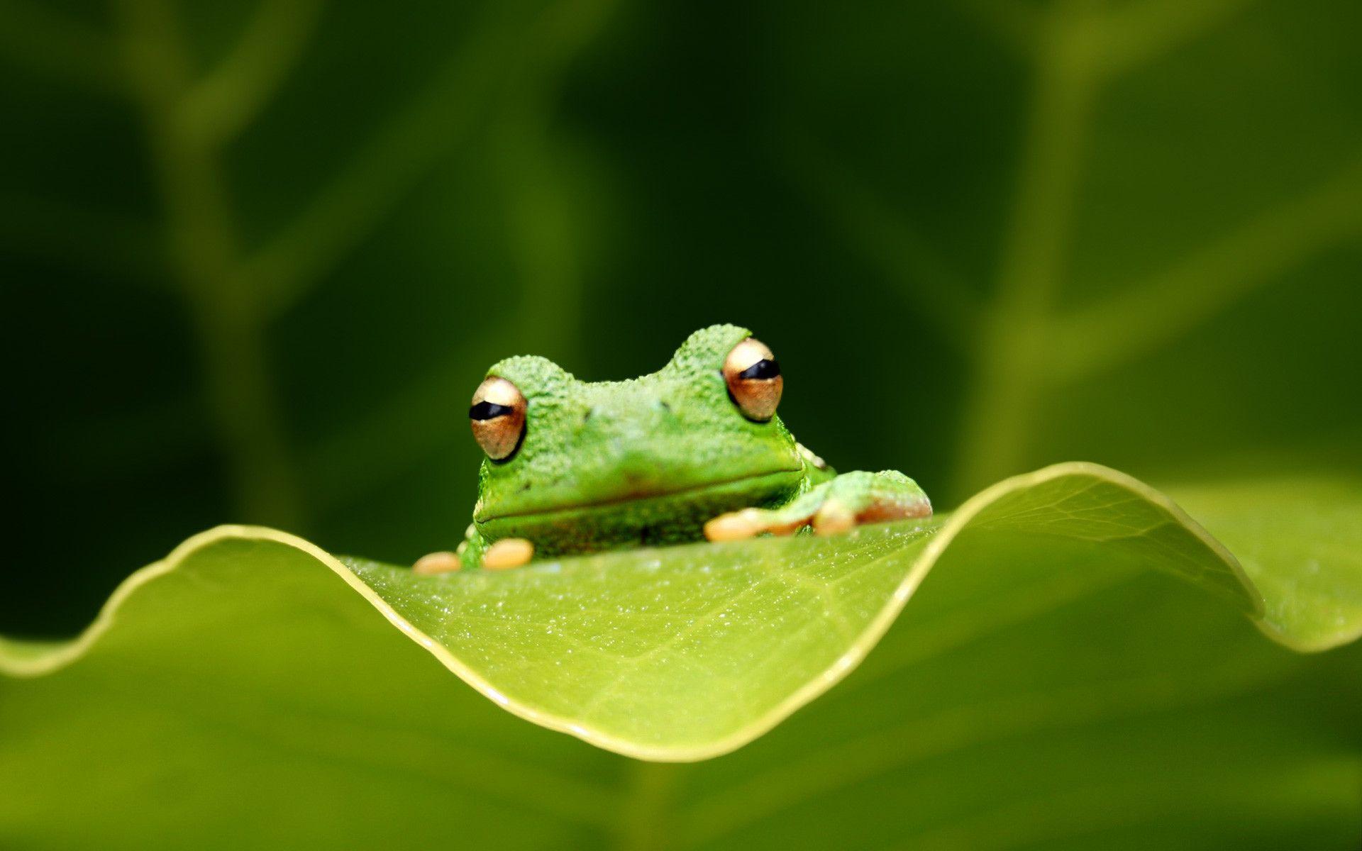Kermit The Frog Computer Wallpapers On Wallpaperdog