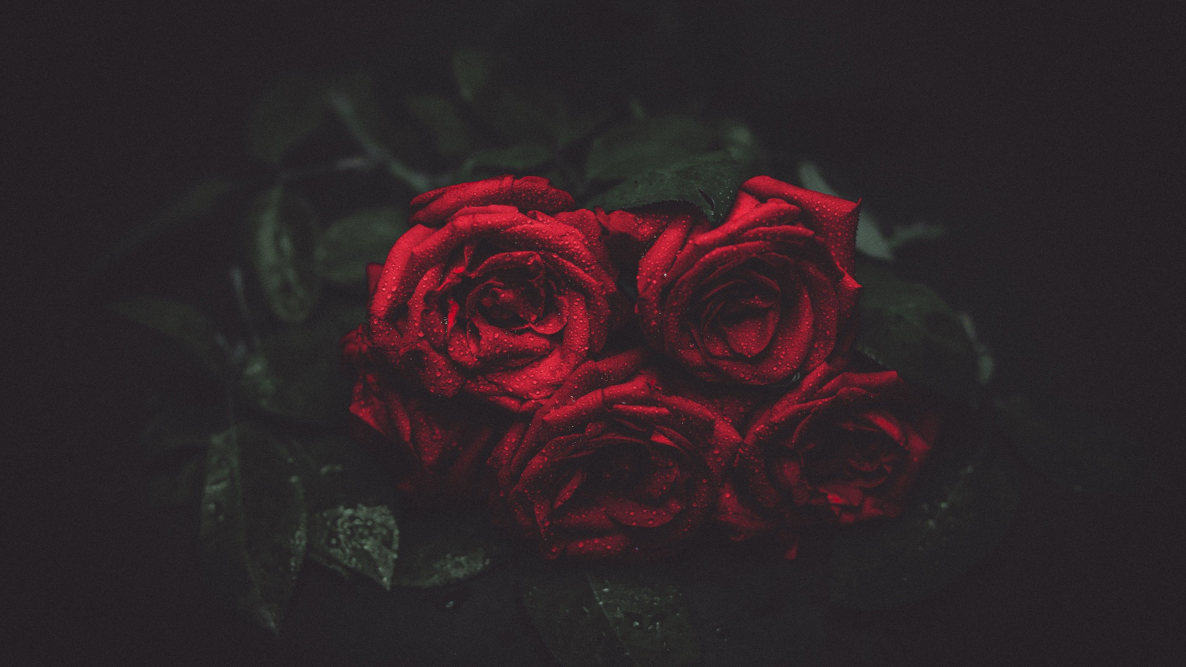 Black And Red Rose Wallpapers On Wallpaperdog