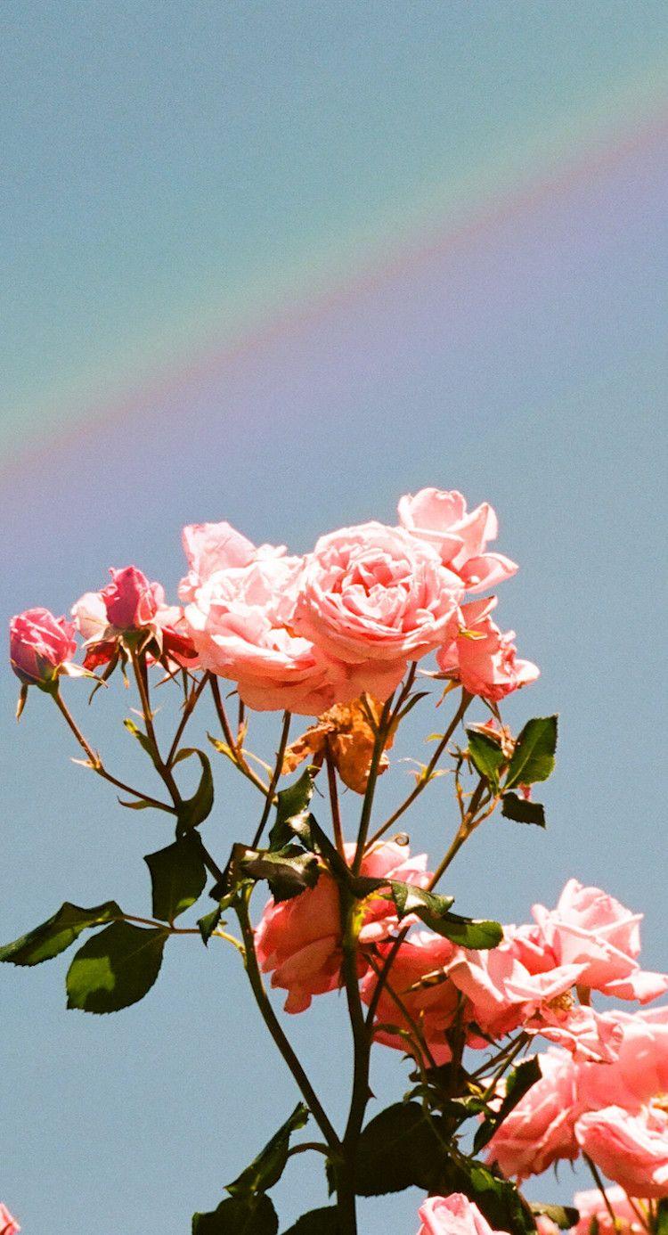 Pastel Aesthetic Rose Wallpapers on WallpaperDog
