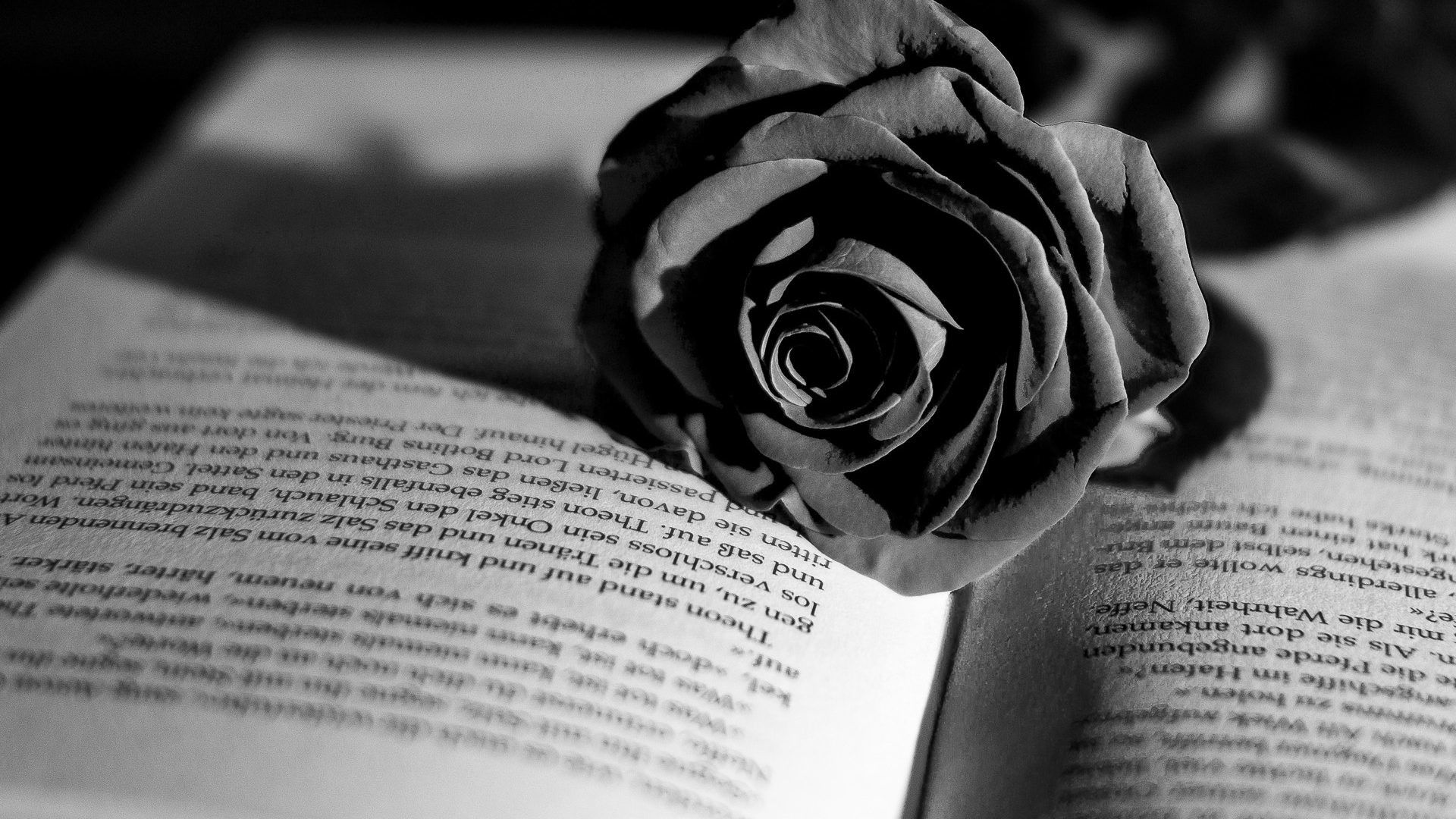 Black And White Rose Wallpapers On Wallpaperdog