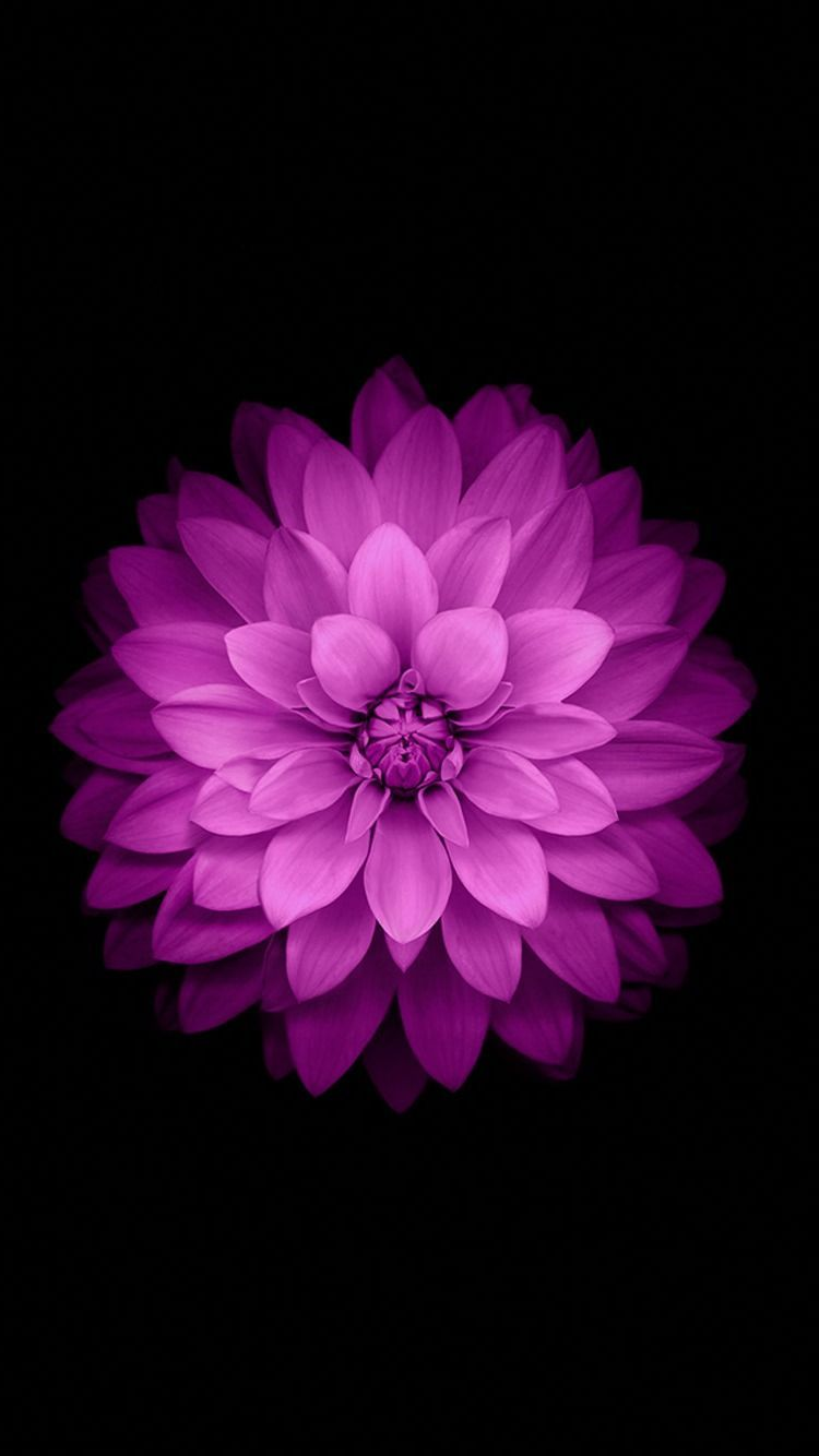 Purple Flower iPhone Wallpapers on WallpaperDog