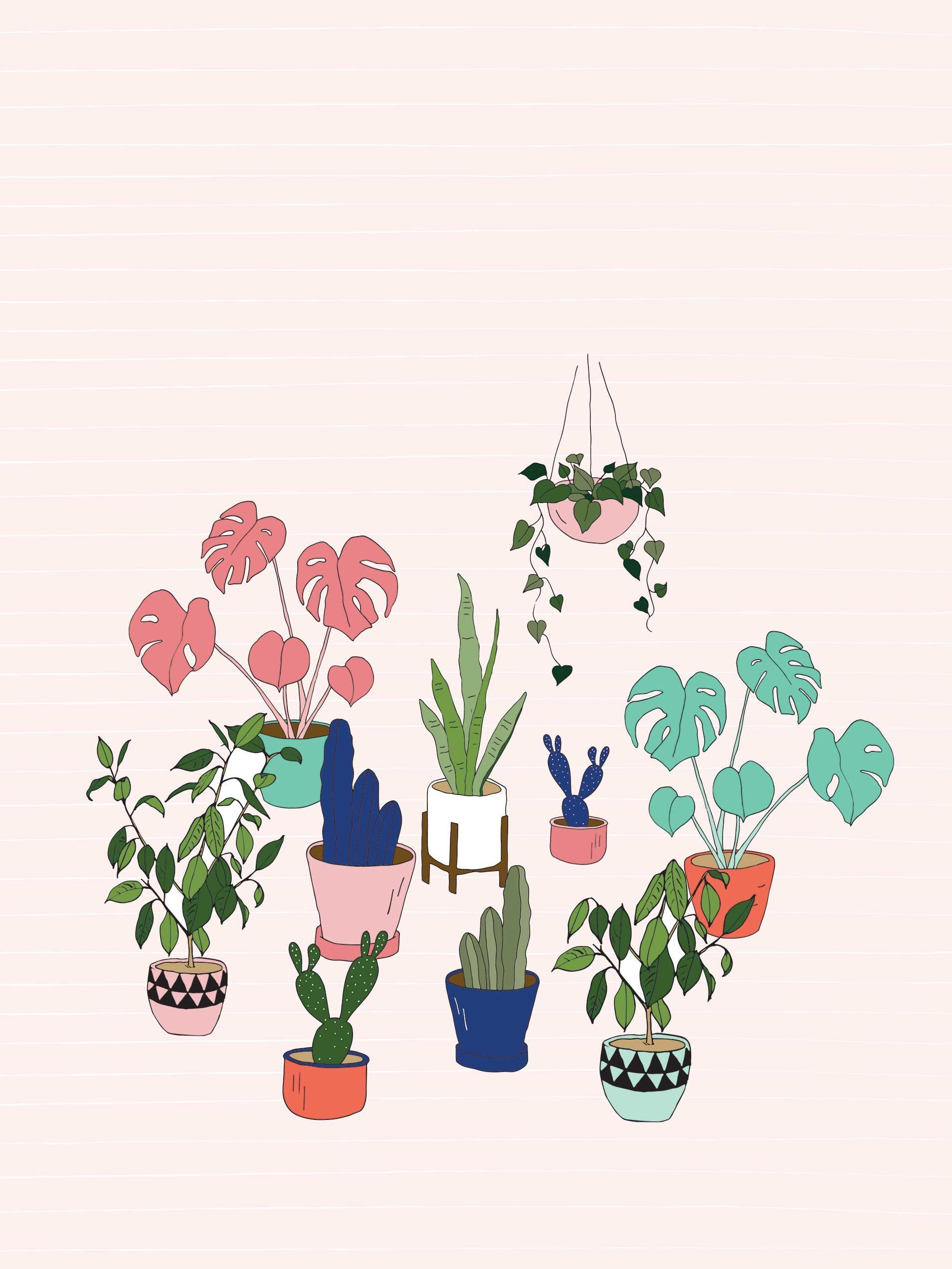Cute Plant Wallpapers On Wallpaperdog