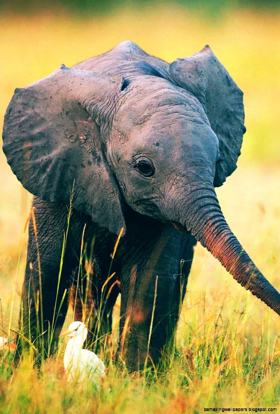 Cute Elephant iPhone Wallpapers on WallpaperDog