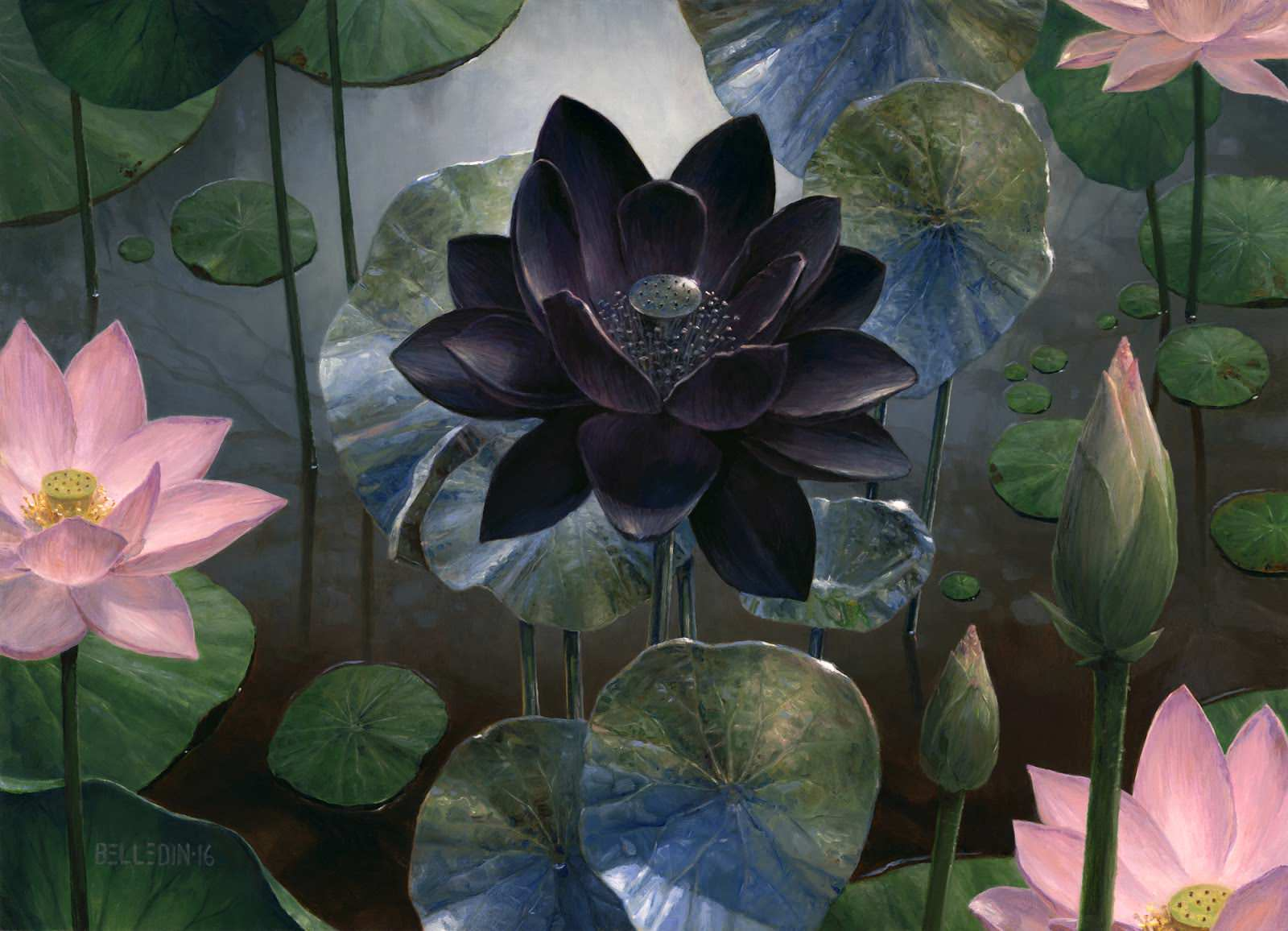 Black Lotus Wallpapers on WallpaperDog