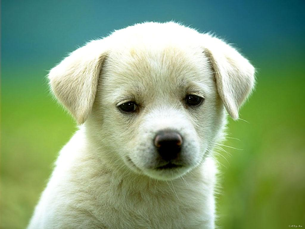 Cute Cats And Dogs Wallpapers On Wallpaperdog