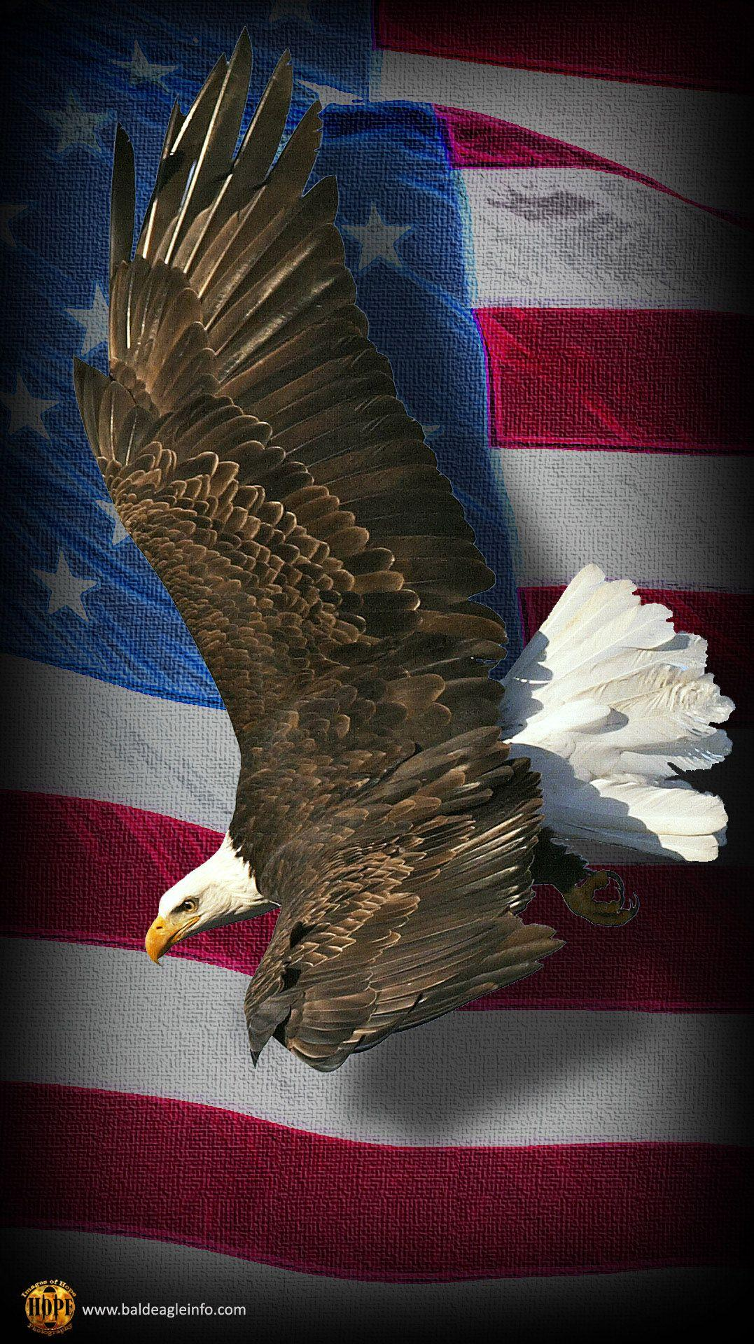 Eagle And Flag Phone Wallpapers On Wallpaperdog