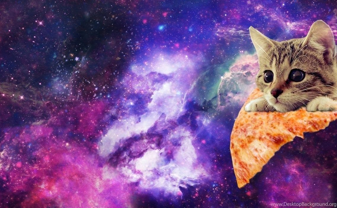Cat Galaxy Wallpapers on WallpaperDog