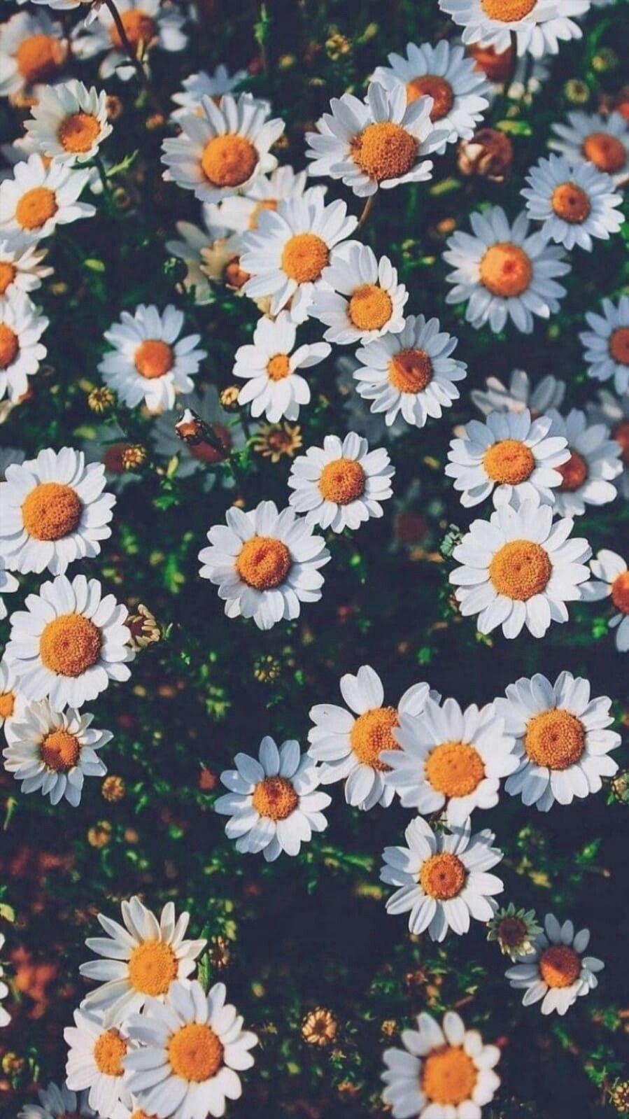 Tumblr Flower Wallpapers on WallpaperDog