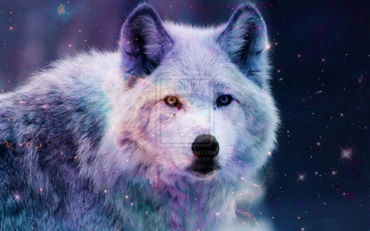 Anime Galaxy Wolf Wallpapers On Wallpaperdog