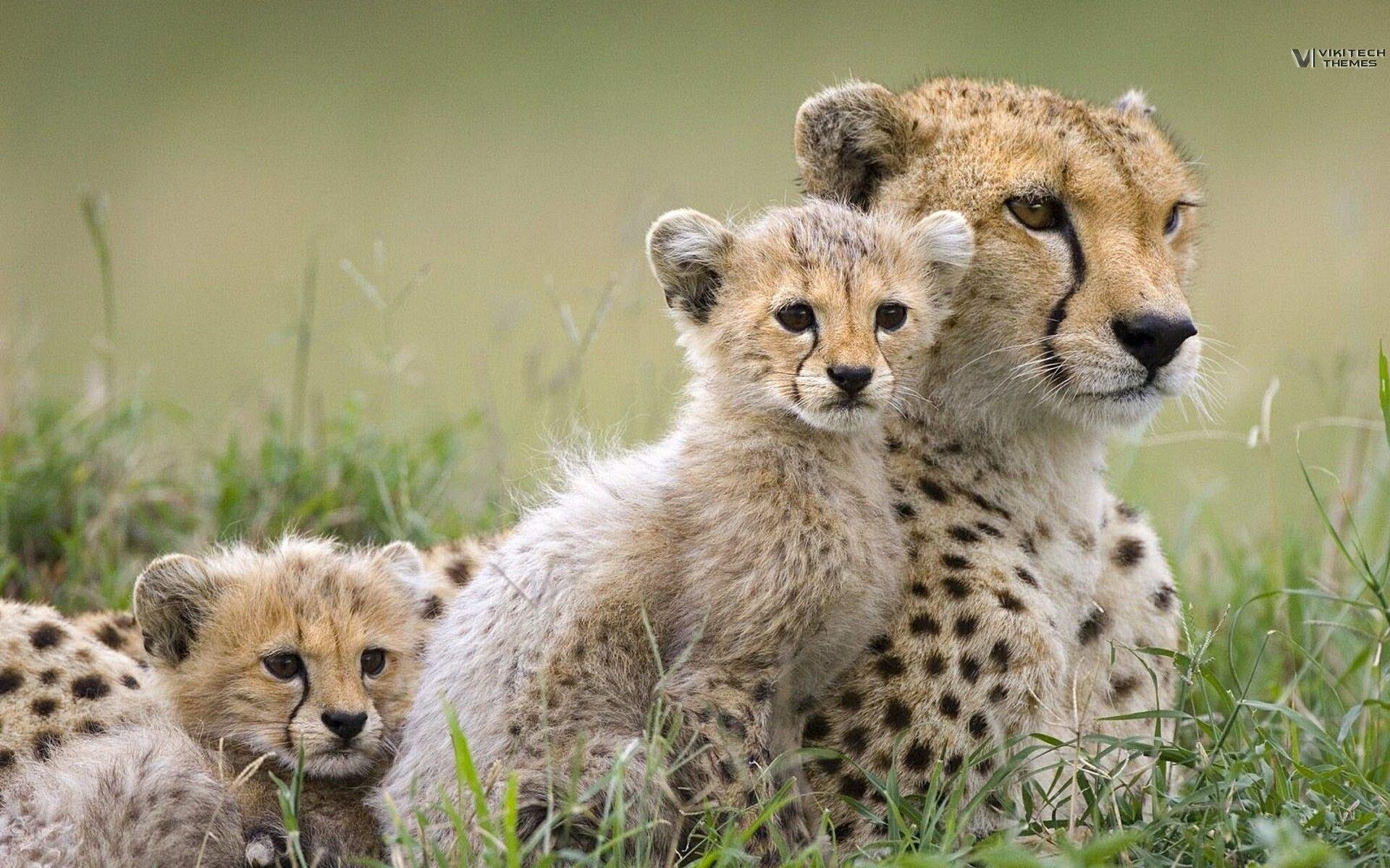 Baby Wild Animals Wallpapers on WallpaperDog