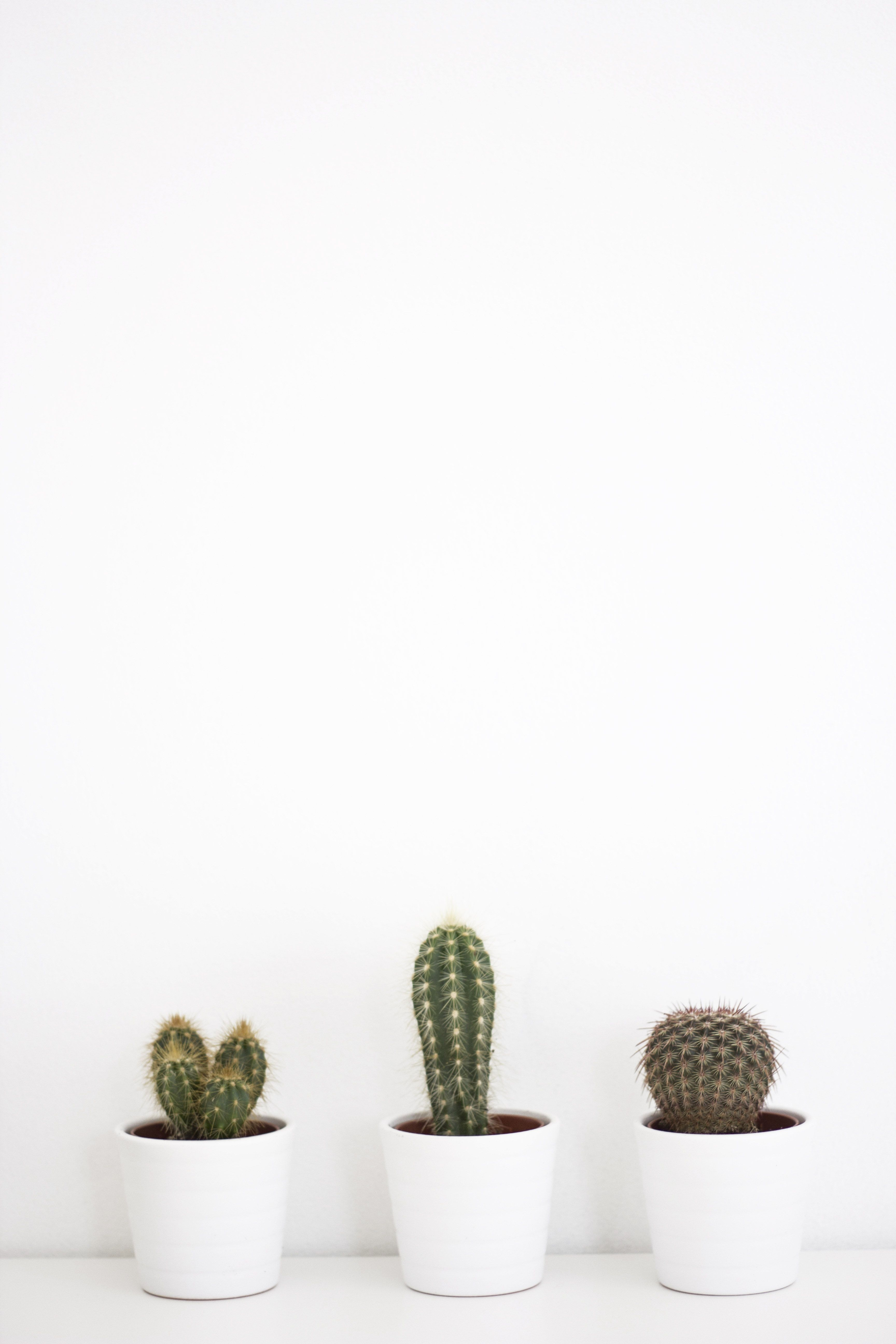 Aesthetic Cactus Wallpapers On Wallpaperdog