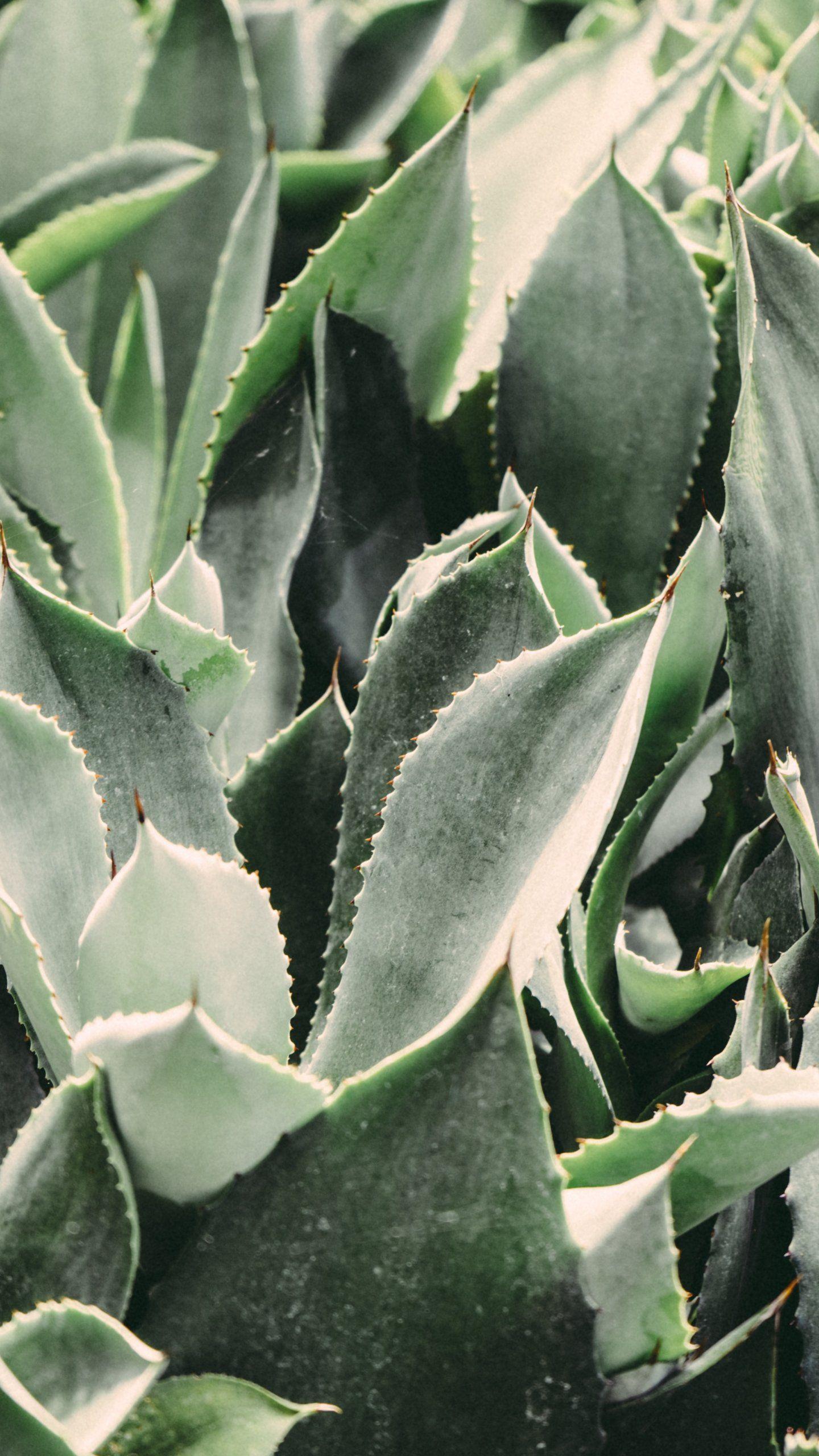 Real Cactus Aesthetic Wallpaper Novocom Top