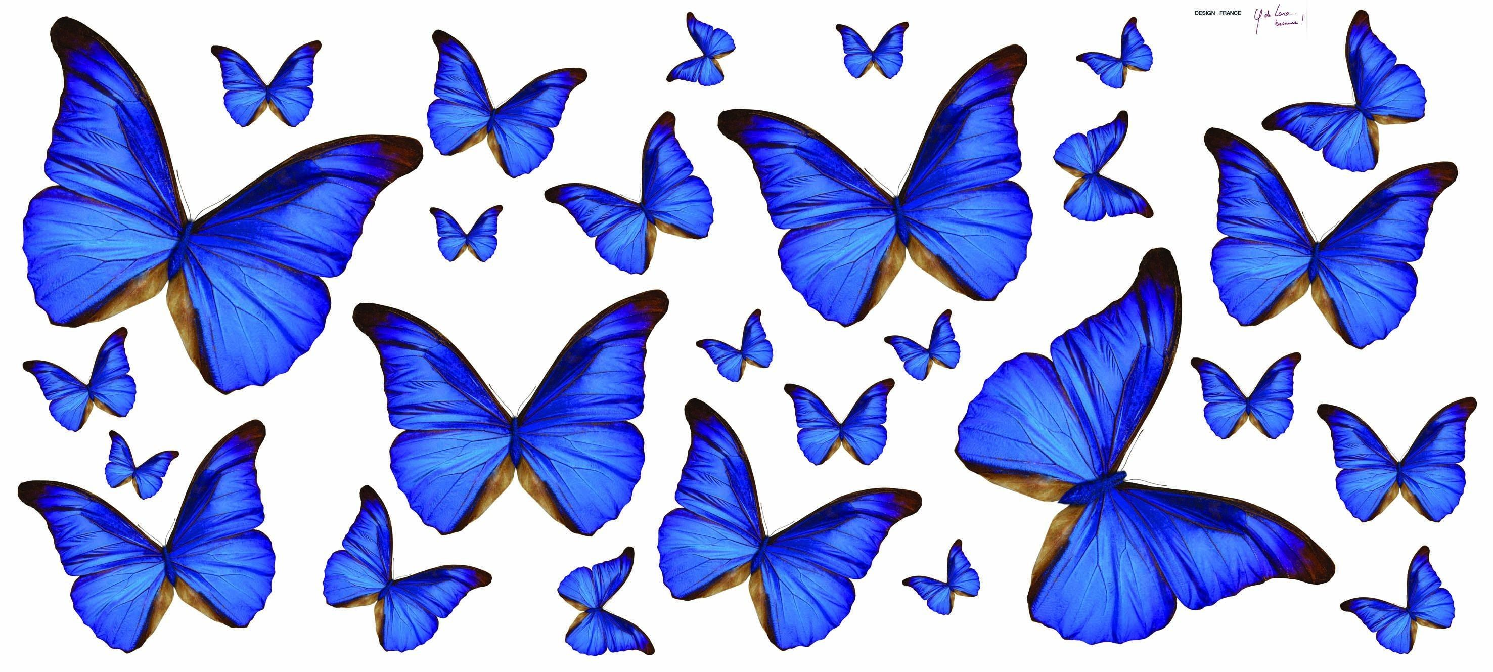 Blue Butterfly Wallpapers On Wallpaperdog Hd wallpapers for laptop aircraft. blue butterfly wallpapers on wallpaperdog