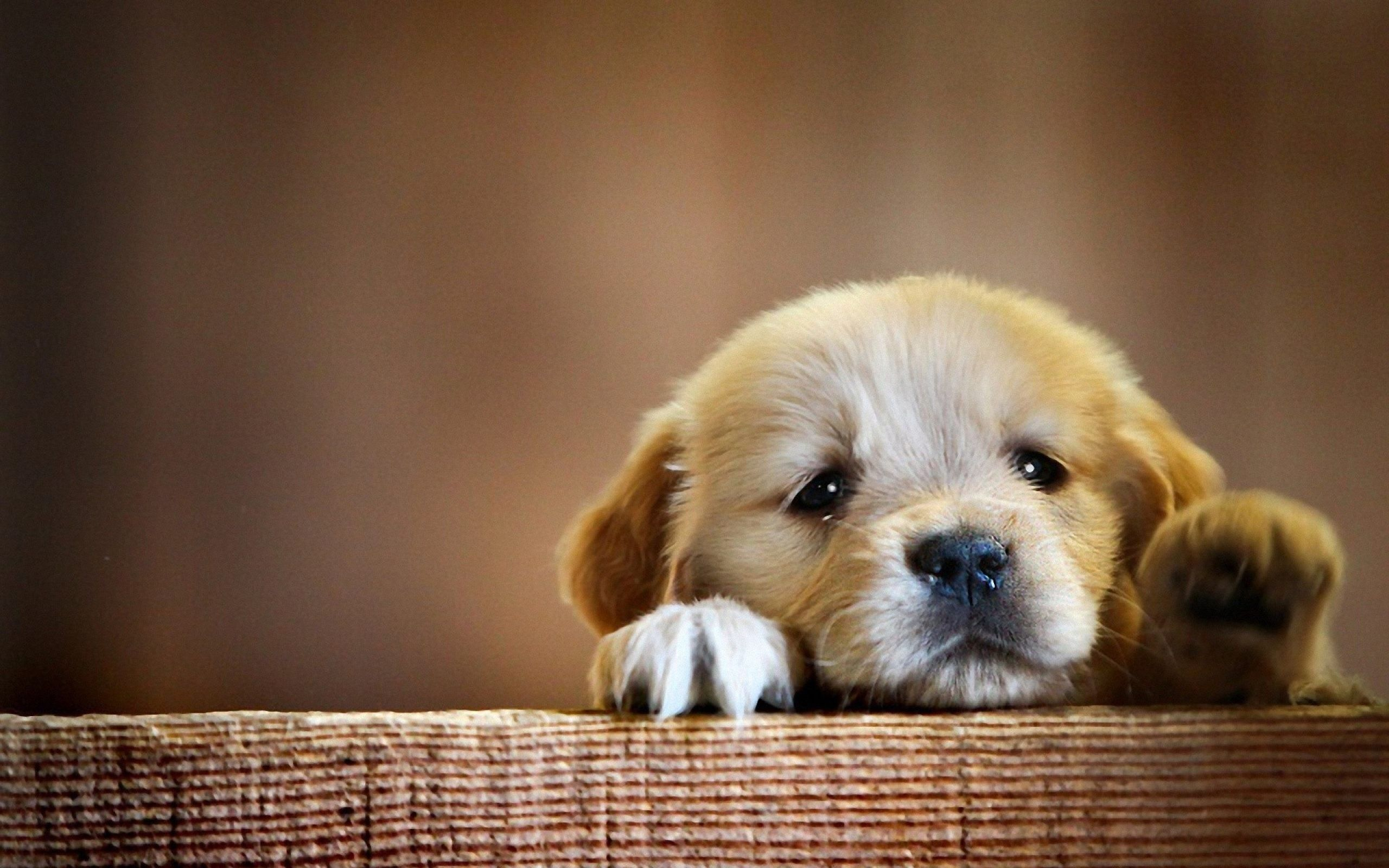 Cute Sad Puppy Wallpapers On Wallpaperdog