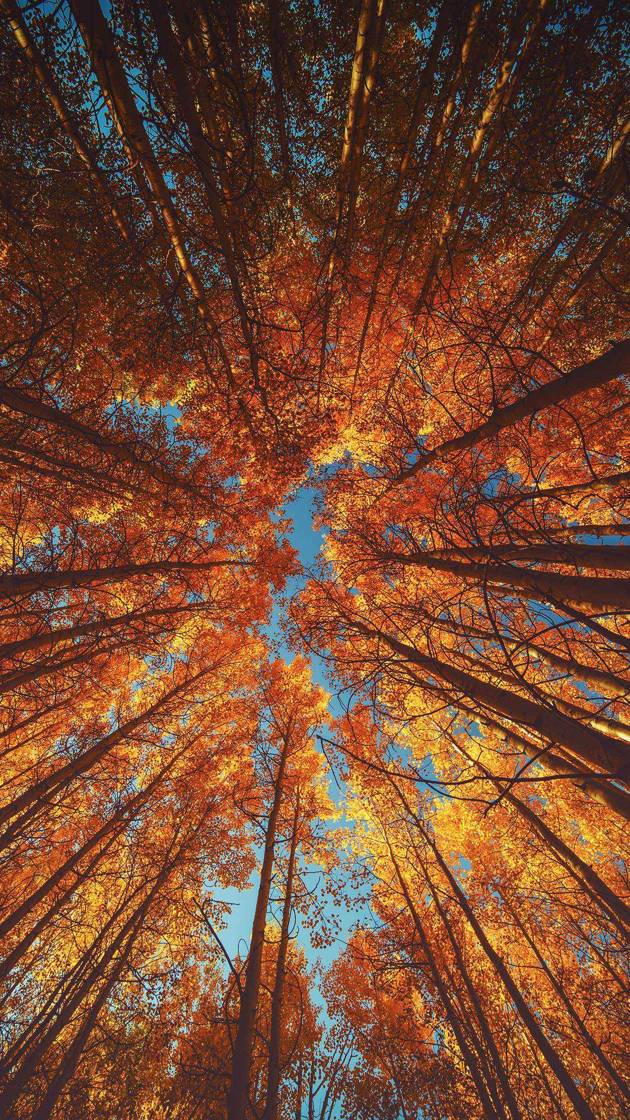 Fall Iphone Wallpapers On Wallpaperdog