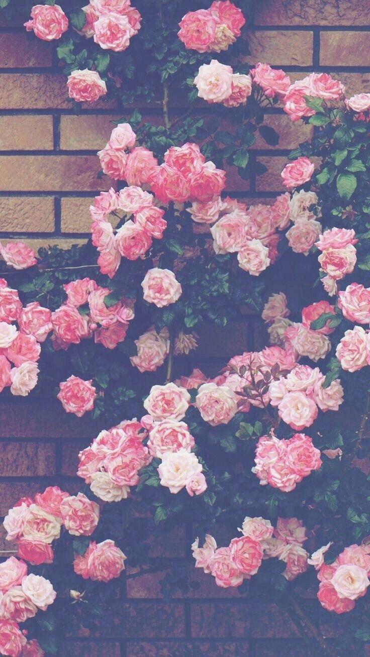 Aesthetic Pink Flower Wallpapers On Wallpaperdog
