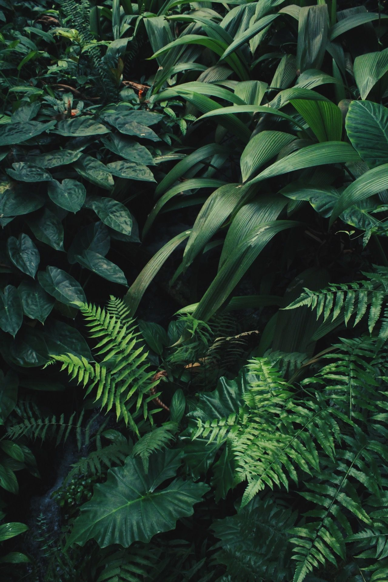 green plant aesthetic wallpapers on wallpaperdog