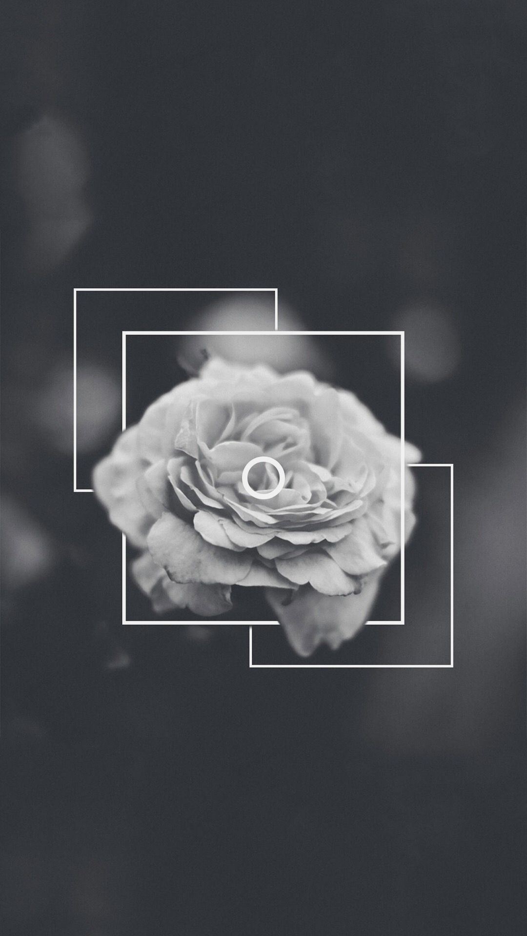 Black Rose Aesthetic Wallpapers On Wallpaperdog