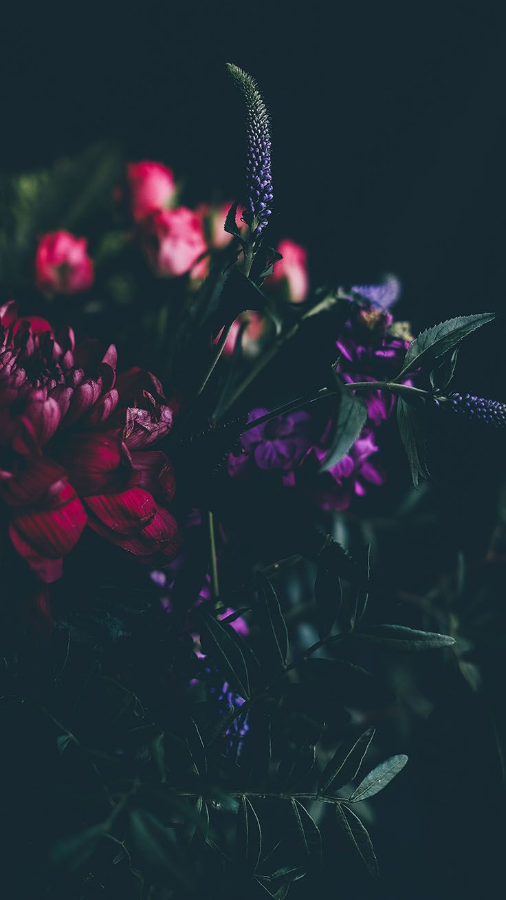 Purple Rose Aesthetic Wallpapers On Wallpaperdog