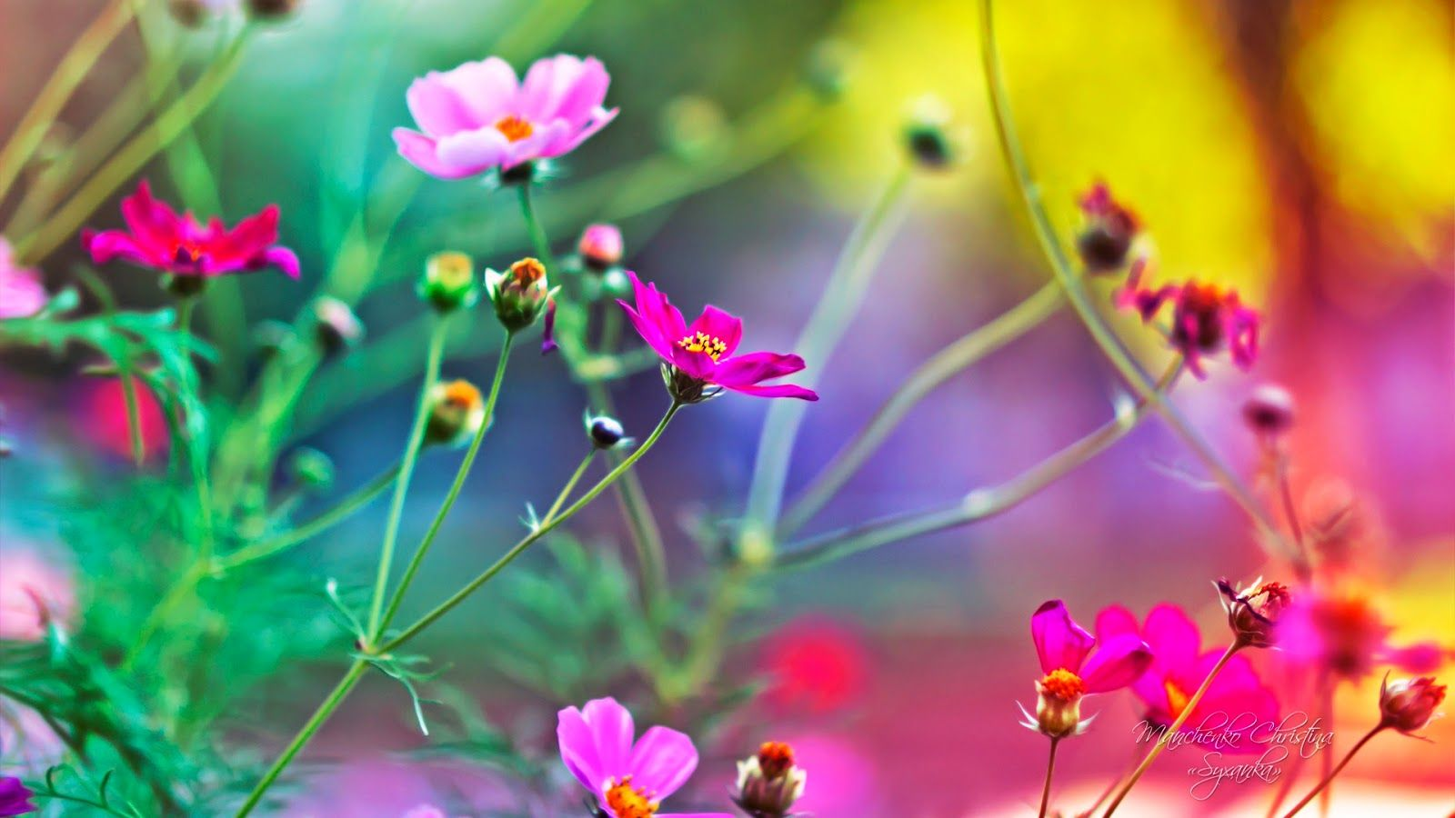 Hd Flower Wallpapers On Wallpaperdog
