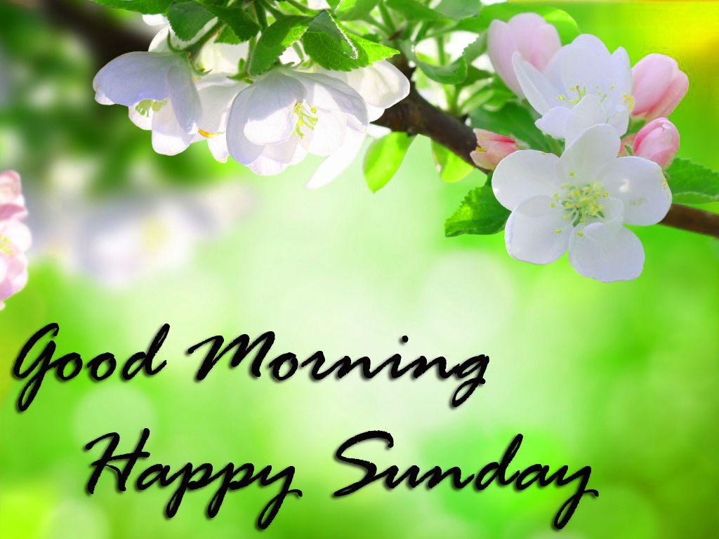 Sunday Good Morning Wallpapers On Wallpaperdog