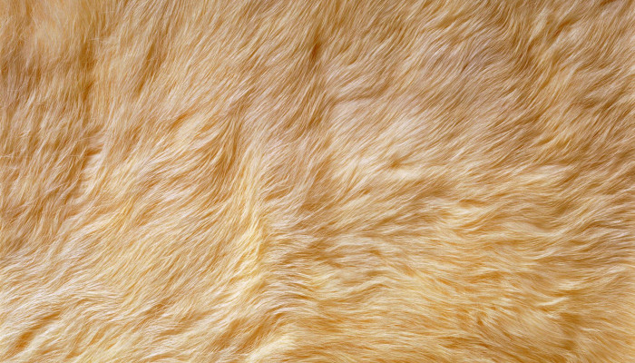 Animal Fur Wallpaper